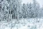 Woodlands and Wetlands after Snowstorm, Stoddard, NH