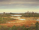 Wetland Prairie in Okefenokee NWR in Winter