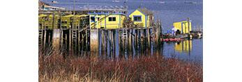 Lobster Shacks and Rosehips, Burnt Coat Harbor
