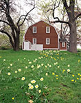 Betsey Williams Cottage and Daffodils, Roger Williams Park