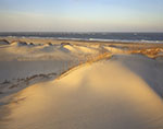 Late Evening Light on Dunes at Pea Island National Wildlife Refuge