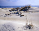 Sand Dunes on Pea Island National Wildlife Refuge