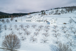 White Barns and Apple Orchard at Maplewood Farm in Winter, Woodstock, VT