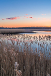 Herring River Winding through Marshes at Sunset, Cape Cod, West Harwich, MA