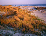 Late Evening Light on Dune Grasses on Ocracoke Island