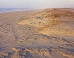 Morning Light on Dunes on Ocracoke Island