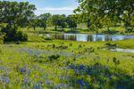 Texas Bluebonnets at Small Pond, Headwaters of Hickory Creek, Johnson City, TX