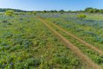 Cart Road in Field of Texas Bluebonnets in Spring, near Mason, TX