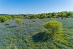 Field of Texas Bluebonnets in Bloom in Spring, near Mason, TX