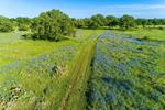 Cart Road through Field of Texas Bluebonnets, near Johnson City, TX