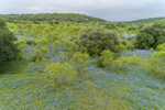Texas Bluebonnets and Mesquite Trees in Spring, Texas Hill Country, near Llano, TX
