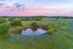 Sunrise over Field of Texas Bluebonnets and Small Pond, near Mason, TX
