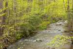 Hope Brook and Forests with Spring Foliage, Ashford, CT