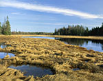 Bass Harbor Salt Marsh