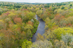 Spring Foliage in Forests along Willimantic River, Tolland, CT