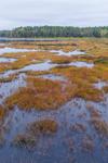 South Spectacle Pond in Spring, Quabbin Reservation, New Salem, MA