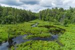 Freshwater Marsh along East Branch Swift River, Popple Camp Wildlife Management Area, Petersham, MA