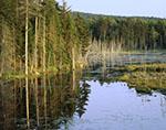 Lodo Pond and Bordering Forest, Adirondacks