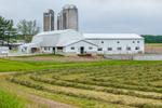 Big White Barns with Silos and Newly Cut Hay, Finger Lakes Region, Benton, NY