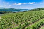 Vineyards near Keuka Lake, Finger Lakes Region, Village of Hammondsport, NY