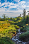 Early Morning Light Shines on Small Stream and Salt Marsh Leading to Cobscook Bay, Seward Neck, North Lubec, Lubec, ME