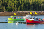 Early Evening Light Shines on Colorful Lobster Boats in Pig Island Gut, off Great Wass Island and Pig Island, Town of Beals, ME