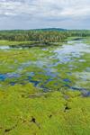 Reynolds Marsh, Downeast Coast Conservancy, Whiting, ME