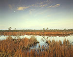 Cattail Marsh along Alligator River