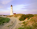 Late Evening Light at Great Point Light with Roses in Bloom along Access Road, Nantucket National Wildlife Refuge