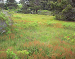 Meadow and Woodlands, Conservation Land