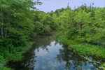 Pachaug River Flowing through Pachaug State Forest, Voluntown, CT