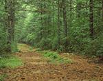 Old Road through Woodlands, Arcadia Management Area