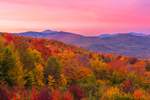 View of Brilliant Fall Foliage from Overlook on Bear Notch Road at Sunset, Mount Washington in Distance, White Mountain National Forest, Bartlett, NH