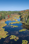 Wetlands and Tributary of Raquette River in Autumn, Adirondack Park, Harrietstown, NY