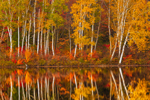 Brillant Fall Foliage and Birch Trees Reflecting in Calm Waters of Spectacle Pond, Brighton State Park, Brighton, VT