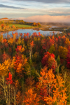 Early Morning Light and Ground Fog Highlight Foliage near Small Pond on Clyde River in Fall, Northeast Kingdom Region, Brighton, VT
