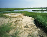 View of Salt Marsh, Three Mile Harbor, Gardiners Bay, Long Island