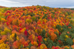 Hillside Ablaze with Brilliant Fall Foliage, Northeast Kingdom, West Barnet, Barnet, VT