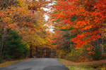 Colorful Foliage along Country Road in Quabbin Park, Quabbin Reservation, Ware, MA