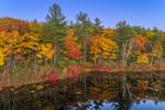 Colorful Fall Folliage along Shoreline of Paradise Pond, Leominster State Forest, Princeton, MA