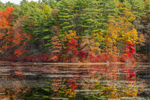 Fall Foliage on Trees Reflecting in Quaddick Reservoir, Thompson, CT