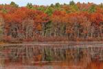 Fall Foliage on Trees Reflecting in Quaddick Reservoir, Thompson, CT