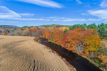 Corn Field along Ware River in Fall, Ware, MA
