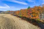 Corn Field along Ware River in Fall, Ware, MA