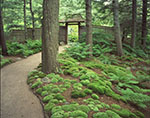 Walkway and Pincushion or White Moss, Asticou Azalea Gardens, Mt. Desert Island