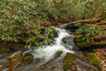 Rhododendrons along Small Cascade on Roaring Fork in Late Fall, Roaring Fork Motor Nature Trail, Great Smoky Mountains National Park, near Gatlinburg, TN