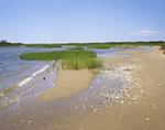 Salt Marsh and Shoreline of Great Salt Pond