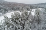 Forests and Frozen Wetlands in Winter after Snowstorm, Green Mountains, Marlboro, VT