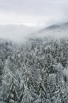 Lifting Fog over Snow-covered Forests near Starton Hill, Green Mountains, Newfane, VT