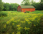 Old Red Barn and Field of Goldenrods